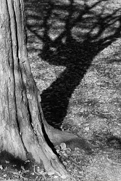 Trunk & Shadow