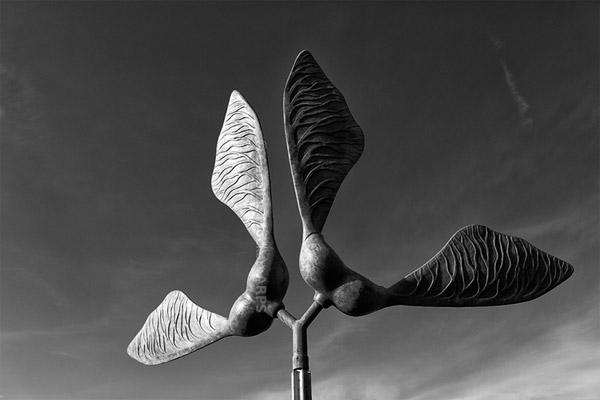 Sycamore Sculpture