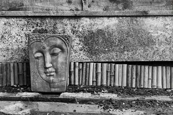 Buddha & Bamboo