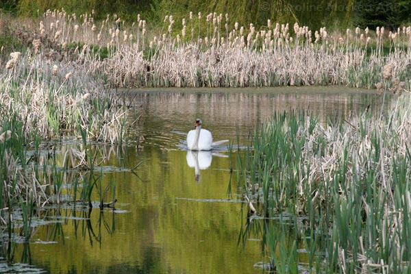 Swan Lake, Marks Hall