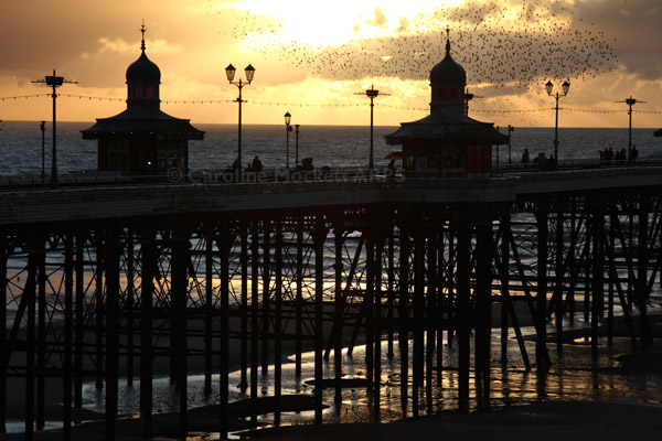 Roosting over North Pier