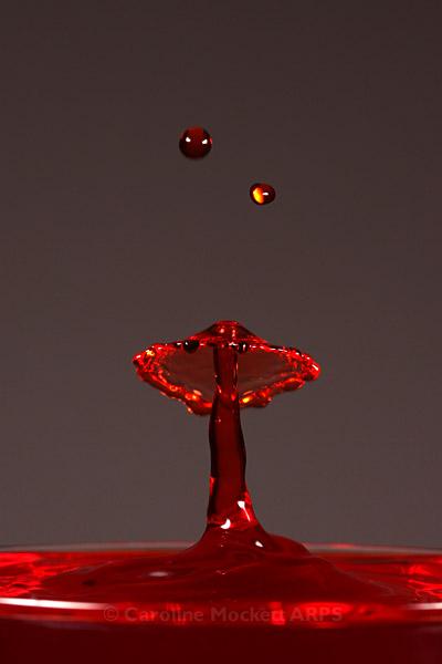 Mushroom And Raindrops