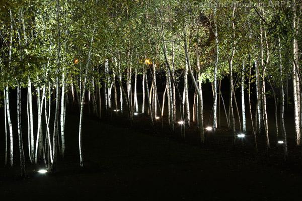 The Avenue Of Birches