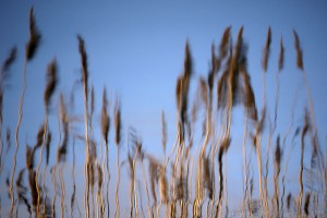 Reed Impressions
