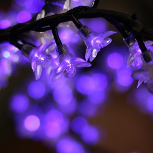 Purple Bokeh Flowers