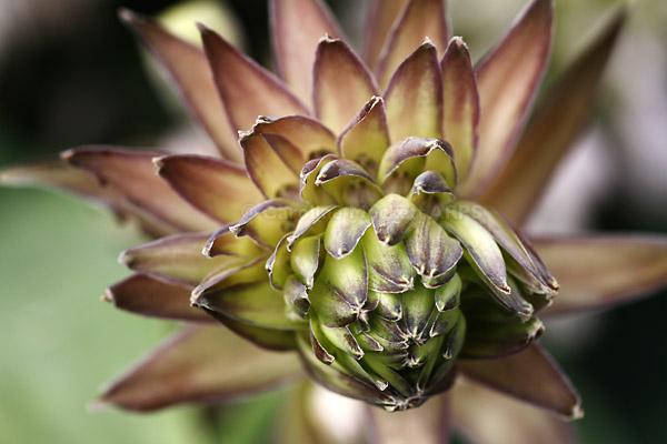 Spikey Succulent