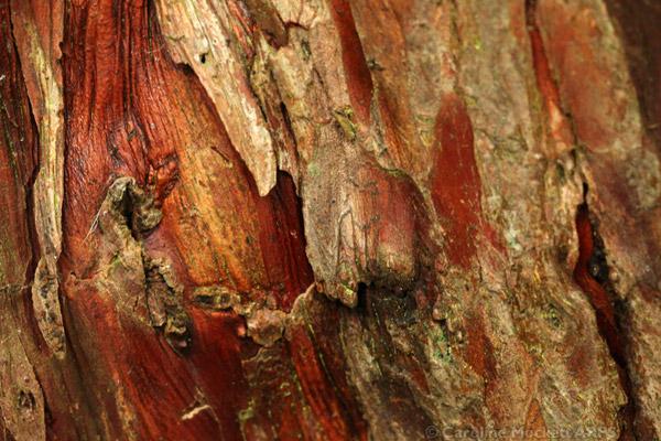 Yew Bark Details