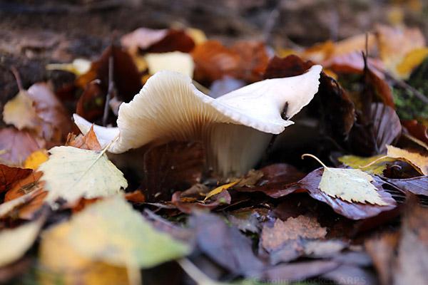 Curly Fungus