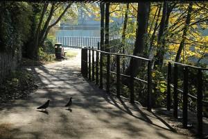 Pidgeon Promenade