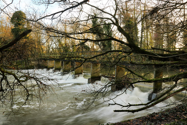 Weir Through The Branches