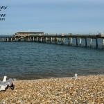 Gulls Watch The Pier