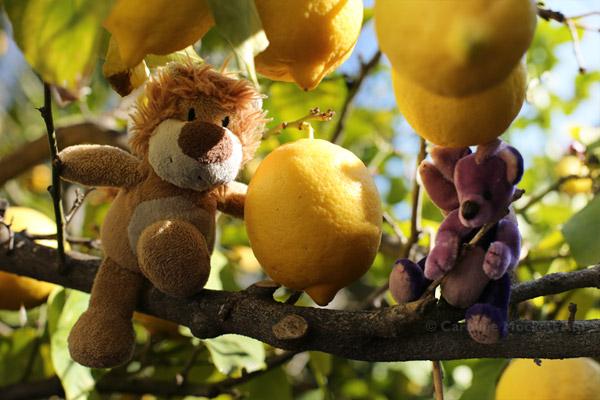 Lovely Lemons!
